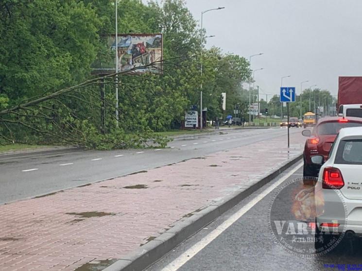 У Львові на дорогу впало дерево (ФОТО)…