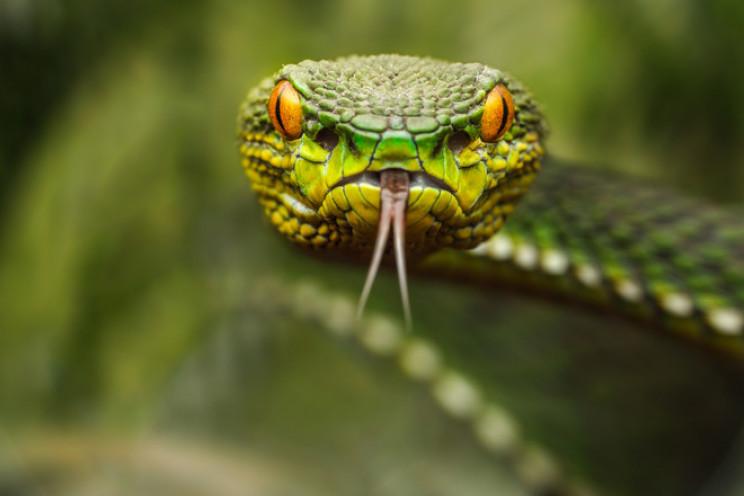 У Сколівському районі змія вкусила 10-рі…