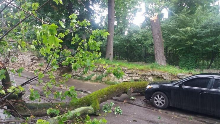 Негода на Хмельниччині валила дерева…