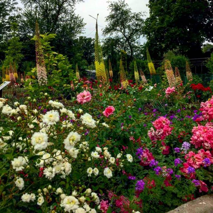 Взрыв цветов и ароматов: В запорожском б…
