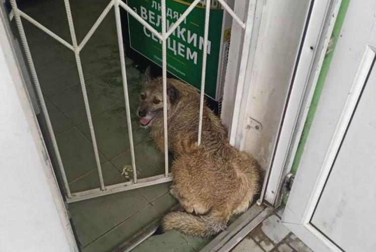 У Херсоні собака, намагаючись врятуватис…