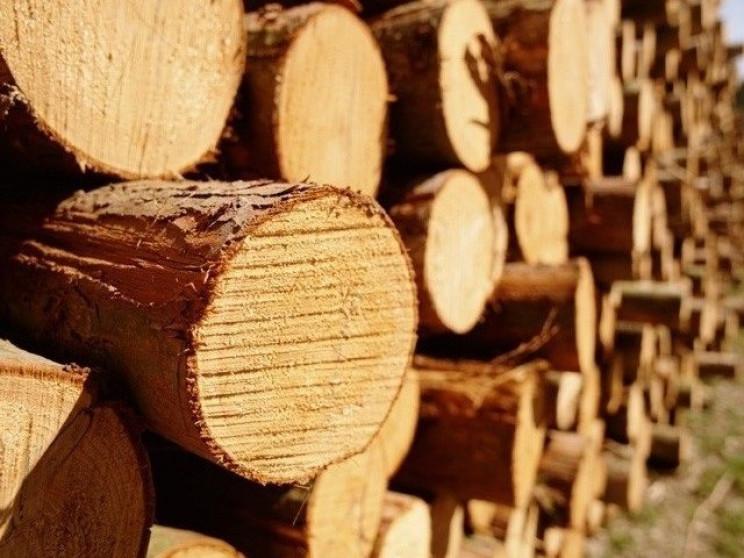 Рівненський лісничий вкрав лісу на понад…