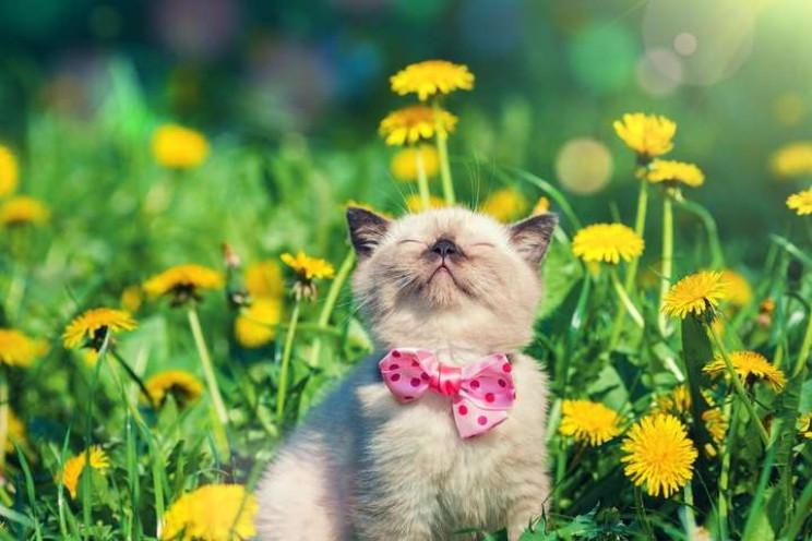Липень стартує в Києві літньою прохолодо…