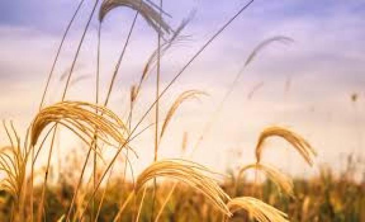 У Запорізькій області фермер ухилився ві…