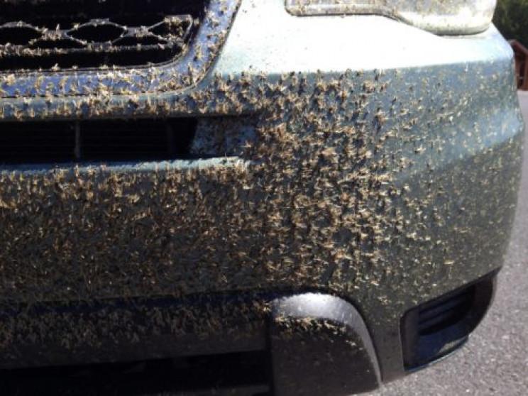 Комахи на капоті авто: Як позбутися наст…