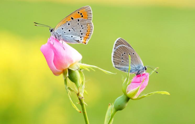 АФІША по-київські: Як квітково, музично…