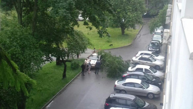 У Львові на жінку впало дерево (ФОТО)…