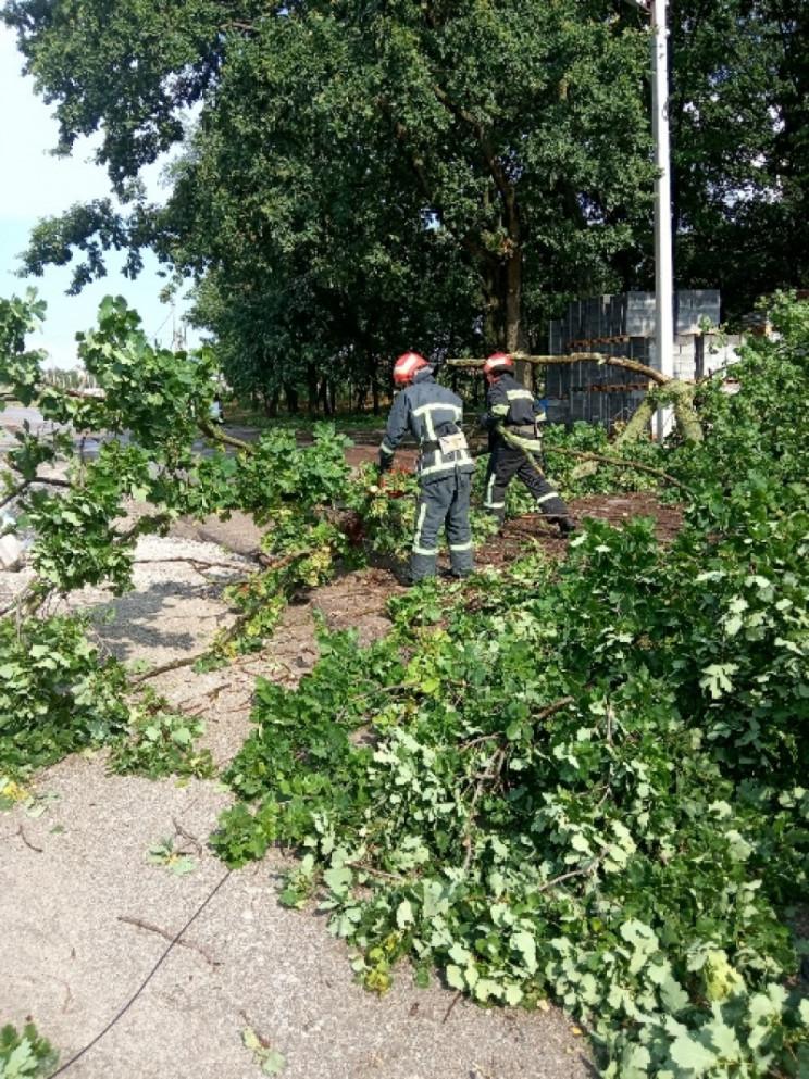 У Кропивницькому аварійне дерево обірвал…