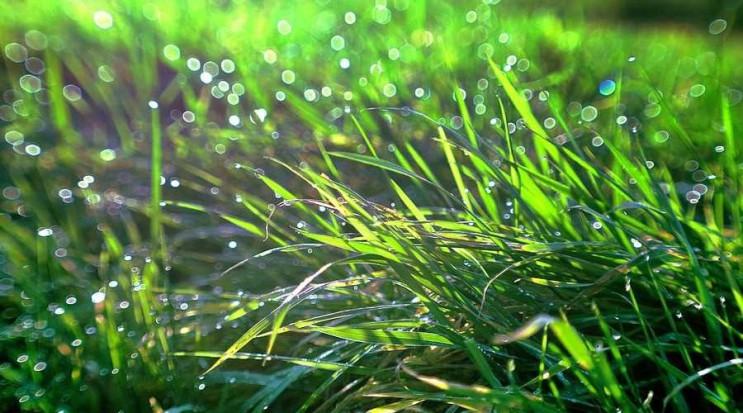 У вівторок у Києві грозові дощі, шквальн…
