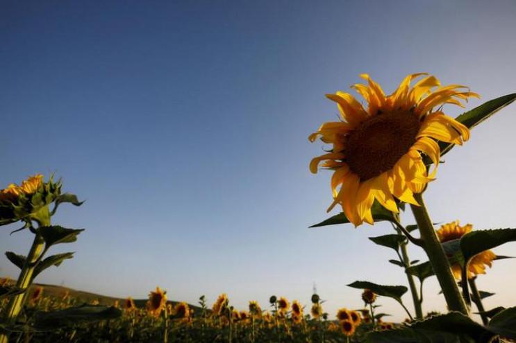 Дождей не будет: Погода на 10 июля в Укр…