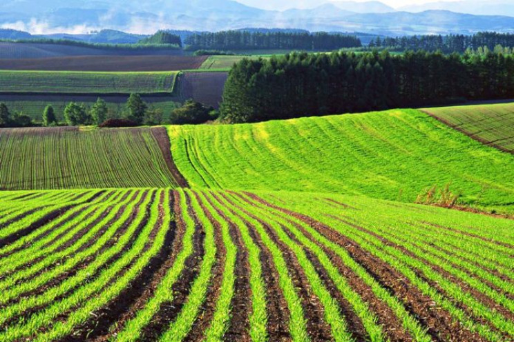 В Україні ринок землі буде зі значними о…