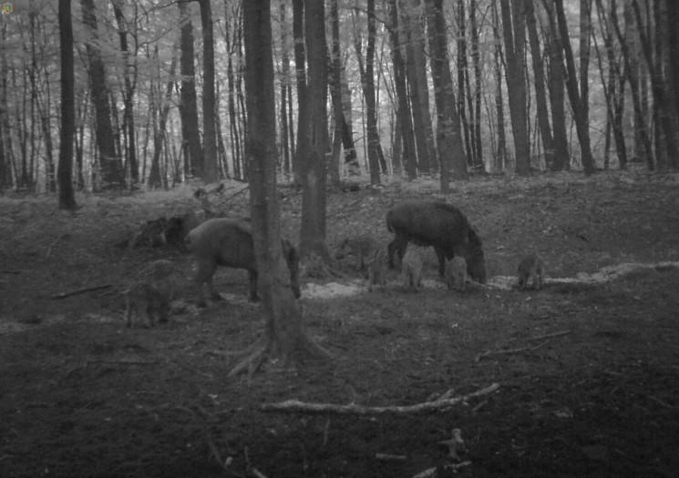 У Рава-Руському лісовому господарстві пл…