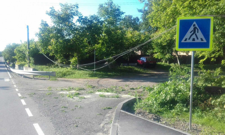 У Селищі дерево впало на дорогу і заблок…