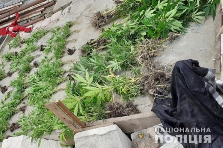 На Тернопільщині чоловік вирощував на го…