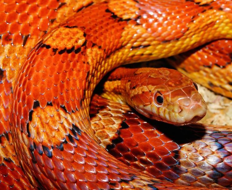 На Полтавщині жінку вкусила змія, вона у…
