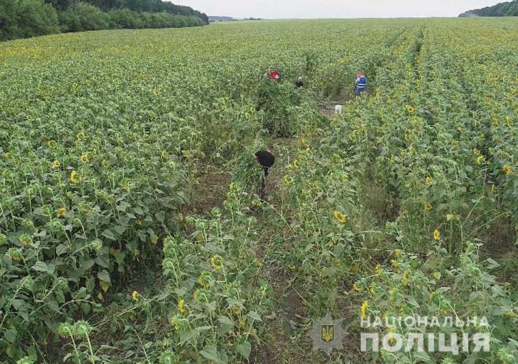На Кропивниччині вирощували коноплі у пр…