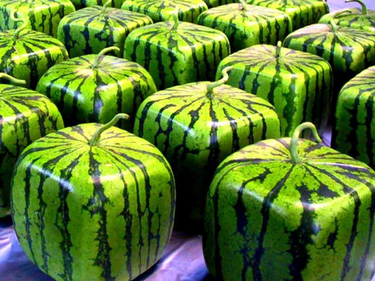 У Львові стрімко виросли ціни на кавуни…