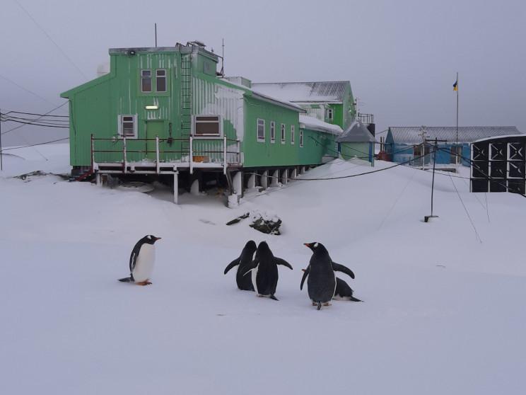 Аномально тепла зима в Антарктиді: На ст…