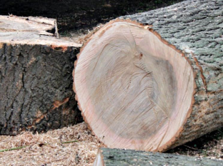 На Тернопільщині дерево забило чоловіка…