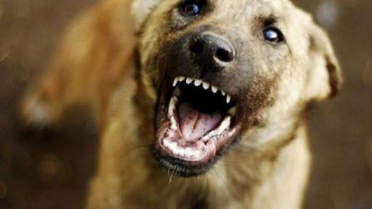 У Вінниці виявили сказ у домашнього пса…
