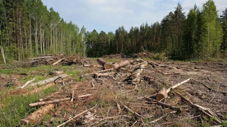 На Кубані незаконно вирубали дерева на 5…