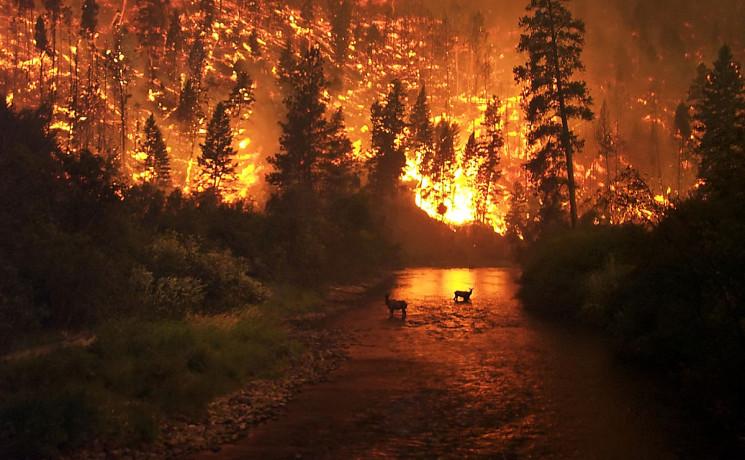 На Кубани сохраняется высокая пожарная о…