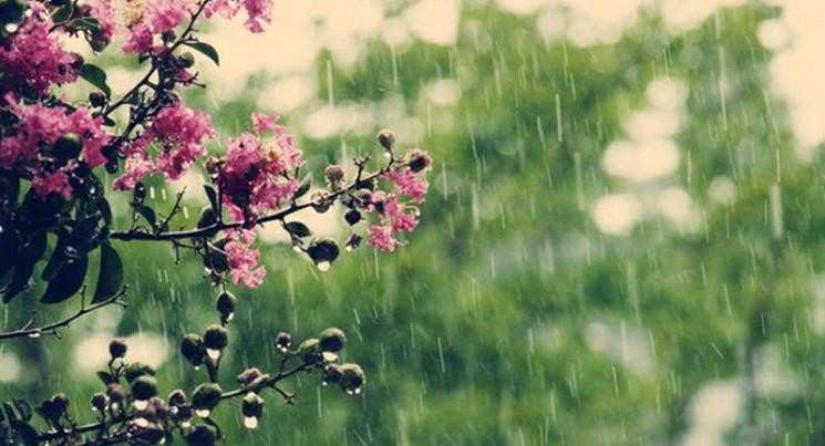 Чому дощ 8 травня – хороша прикмета, і щ…