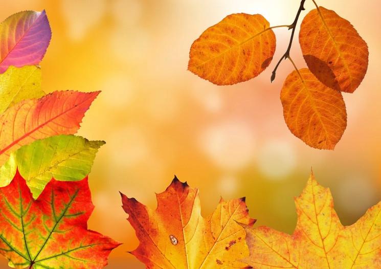 ТОП-5 фільмів про осінь…