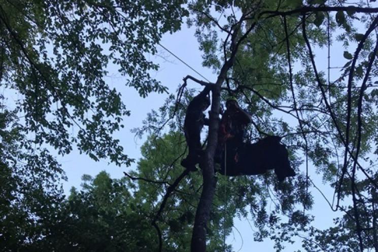У Криму парапланерист завис на дереві в…