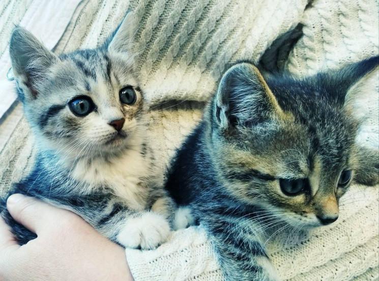 """У Вінниці в музеї роздають кошенят з""""при…"""