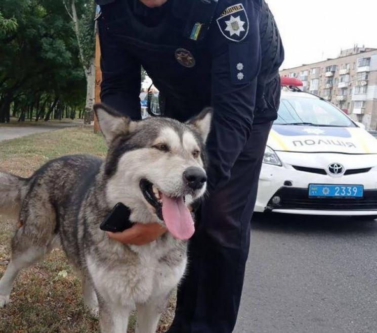У Дніпрі поліцейські упіймали собаку, що…