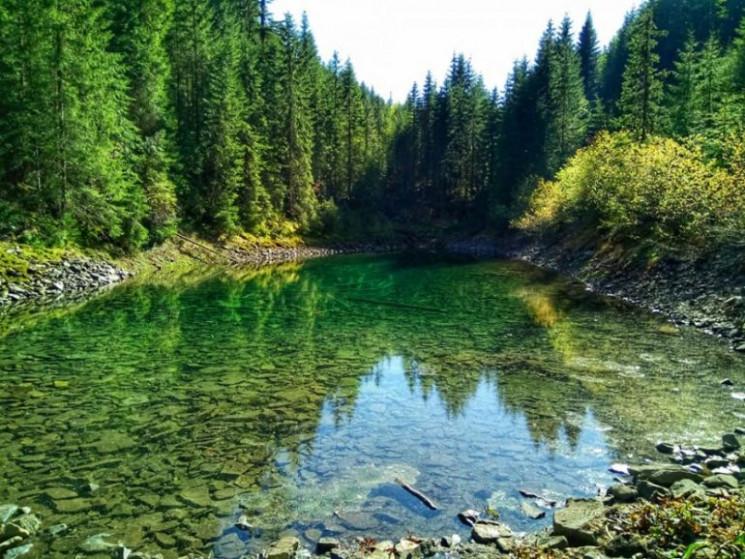Річки Прикарпаття є одними з найчистіших…