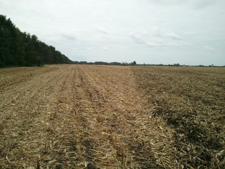 Посіви кукурудзи на Харківщині атакують…