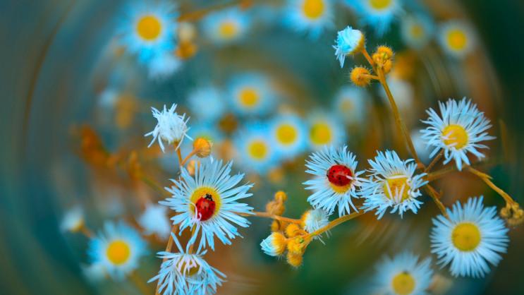 Різнокольоровий травень: ТОП-10 культурн…