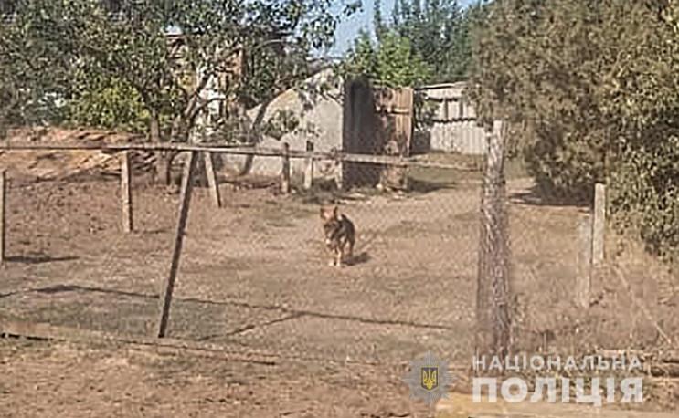 В Запорожской области мужчина натравил п…