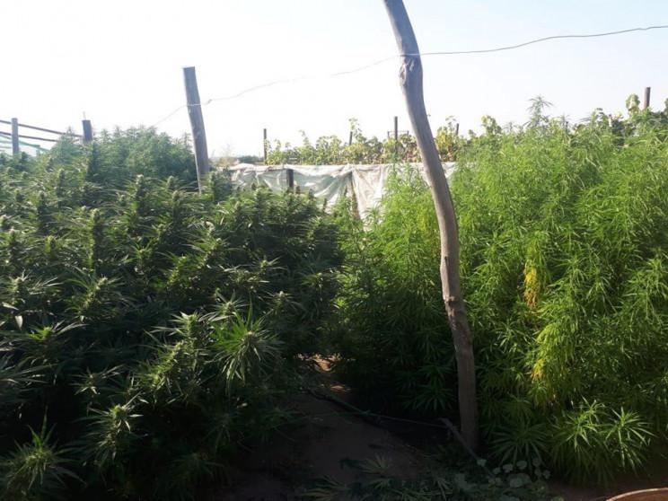 У Запорізькій області СБУ зловила наркод…