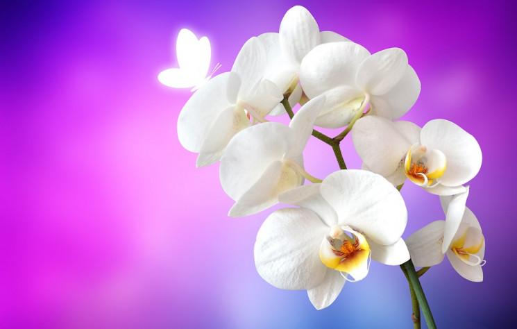 Як доглядати за орхідеєю: Все, що потріб…