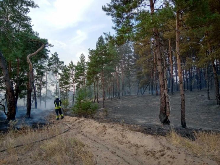На Луганщине снова загорелся лес: Спасат…