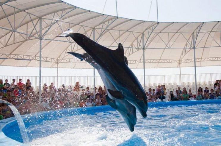 У дельфінарії Феодосії морських ссавців…