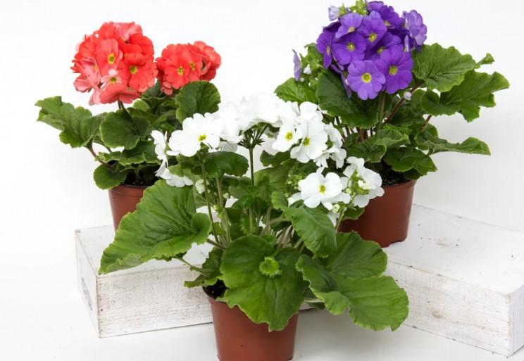 Корисні кімнатні рослини: Що допоможе оч…