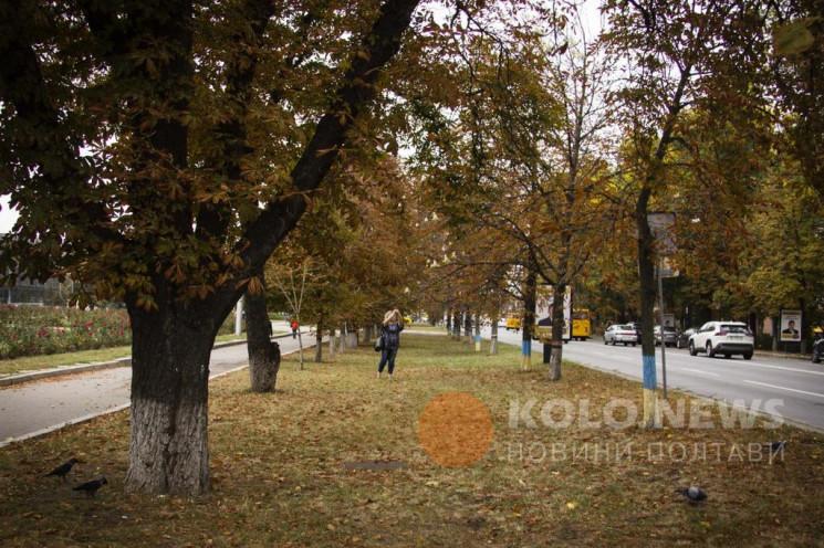 Осенью в Полтаве начали цвести каштаны…
