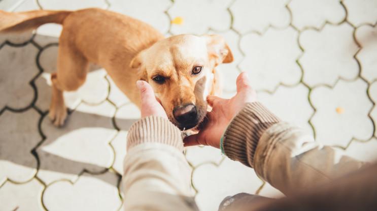 В Кривом Роге ради собаки подняли киоск…