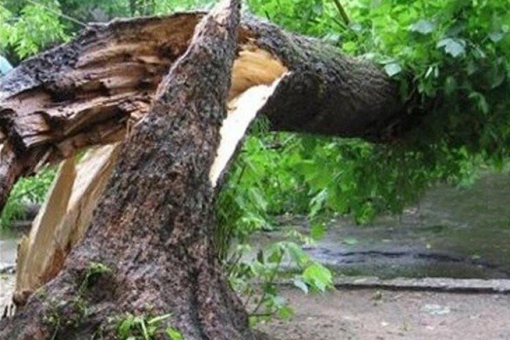 У Куликові на трасу впало дерево…
