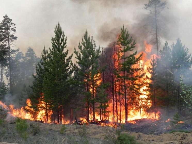 Луганщина знову у вогні: Можливі причини…