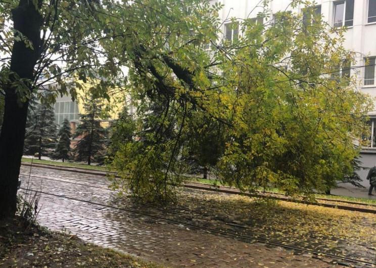 У центрі Львова на трамвайну колію впало…