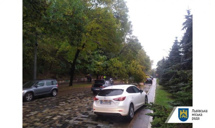 У Львові на вулиці Вітовського дерево вп…