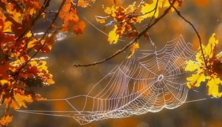 Прикмети 16 жовтня: Як у день Діонісія в…
