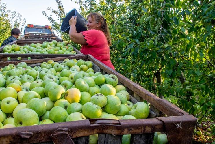 В этом году экспорта яблок из Херсонщины…