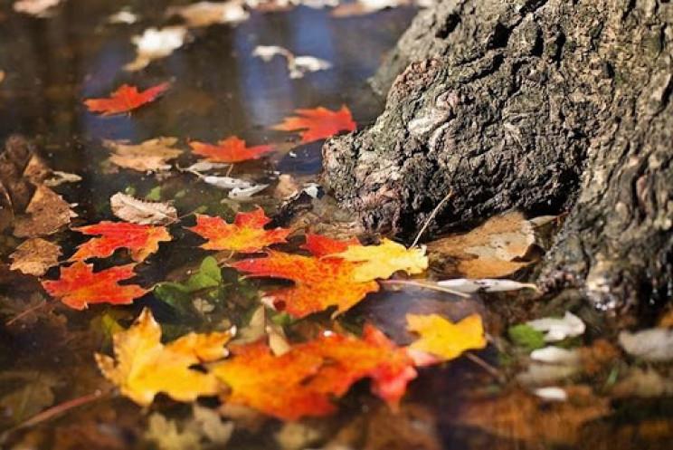 Закарпаття: Прогноз погоди на 17 жовтня…