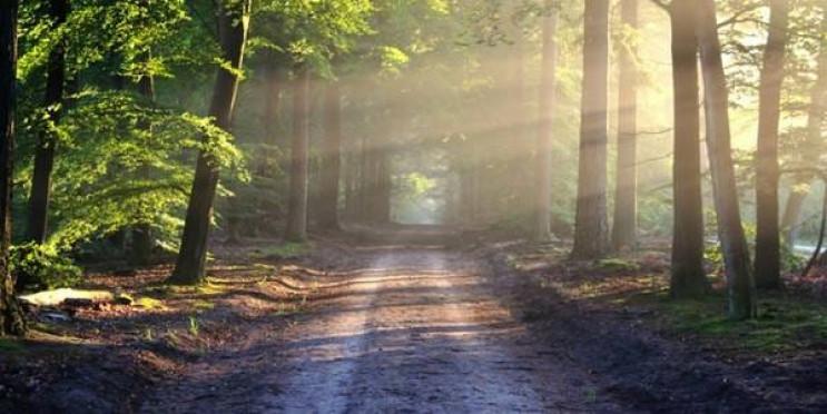 У Рівненській області заблукали 5 грибни…